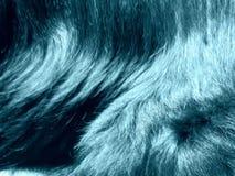 狗毛样式 库存图片