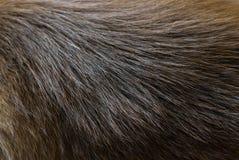 狗毛皮纹理 库存图片