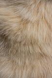 狗毛皮纹理 库存照片