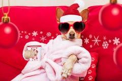 狗温泉健康圣诞节假日 库存图片