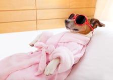 狗温泉健康 库存图片