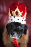 狗滑稽的纵向 免版税图库摄影