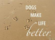 狗爪子在沙子打印在与行情的海滩 免版税库存图片