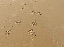 狗爪子在沙子打印在海滩 库存图片