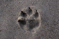 狗爪子打印沙子 免版税库存照片