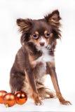狗狗品种  库存照片