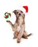 狗狗用圣诞节糖果 免版税图库摄影