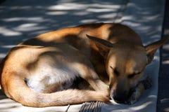 狗狗睡眠 库存图片