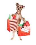 狗狗运载的圣诞节礼物 免版税库存图片