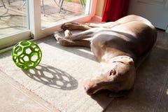 狗玩具 免版税库存照片