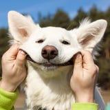 狗瑞士牧羊人的微笑 免版税库存图片