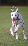 狗生命力 免版税库存图片