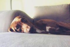 狗生活 免版税库存图片