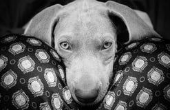 狗生活 库存图片