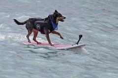 狗生活s 库存图片