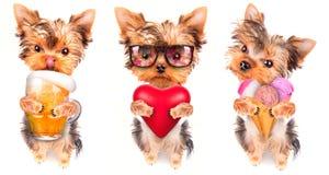 狗用啤酒、冰淇凌和恋人 库存图片