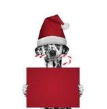 狗用拿着与空间的圣诞节糖果一张卡片文本的 免版税库存照片