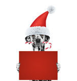 狗用拿着与空间的圣诞节糖果一张卡片文本的 库存照片