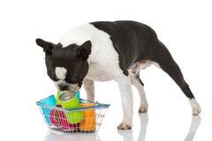 狗用食物 免版税库存图片