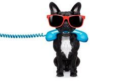 狗电话电话 图库摄影