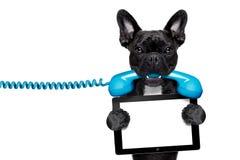 狗电话电话 免版税库存照片