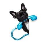 狗电话电话 免版税库存图片