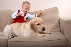 狗疗法 库存图片