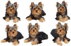 狗的一场照相讲席会 库存照片