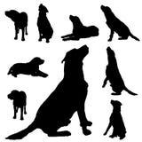 狗的传染媒介剪影 库存图片