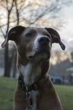 狗的冬天的晚上日落画象 免版税库存图片