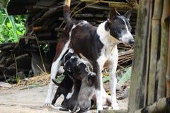 狗的哺养的片刻 免版税库存照片