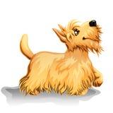狗的常设小狗 免版税图库摄影