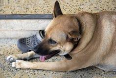 狗的幸福 免版税库存图片