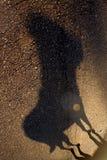 狗的影子 库存图片