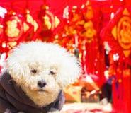 狗的新年快乐 免版税图库摄影