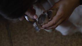 狗的爪被整理 影视素材