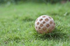 狗的球玩具 库存图片