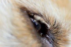 狗的眼睛 免版税库存图片