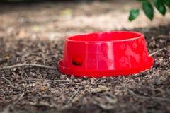 狗的红潮碗,被投入的干燥叶子 库存图片