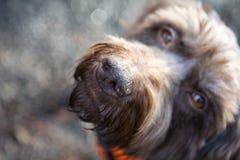 狗的纵向 免版税库存图片