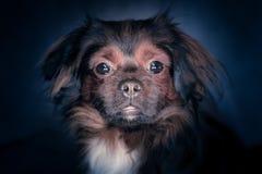 狗的纵向 免版税图库摄影
