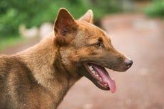 狗的饲者在泰国 免版税库存图片