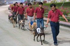 狗的介绍在狗种族的 免版税库存照片