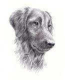 狗的画象 库存例证