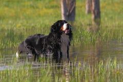 狗的浴 免版税图库摄影