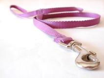 狗皮带紫色 库存照片