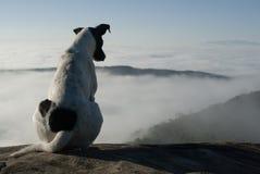 狗看在巴西山的雾 库存照片