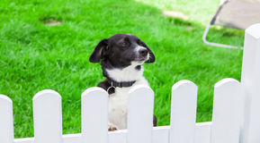 狗看在庭院篱芭 免版税库存图片