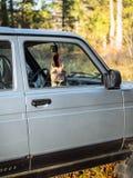 狗看在汽车外面 等待她的发行 免版税库存照片