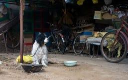 狗真正的生活在郊区的,中国 免版税图库摄影